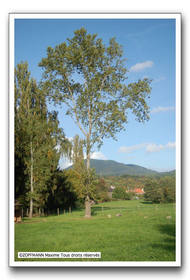 arbre_tour.jpg